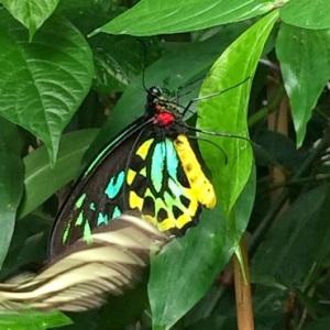 Butterfly pic taken in Massachuesetts 2012