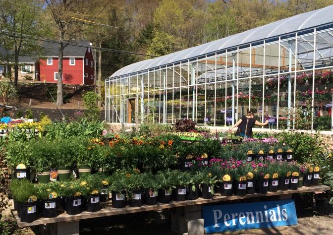 Visit Larson's Garden Center and enjoy the beauty of the season!