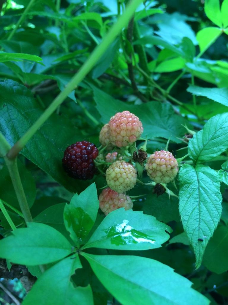 Raspberries screaming ahhhh!