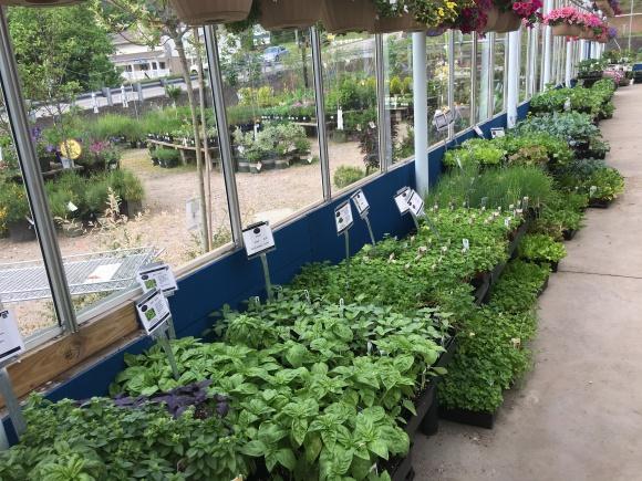 Do you Have a HerbGarden?